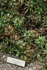 Aloe (JenGallardo) Tags: nyc newyorkcity plants newyork aloe bronx nybg newyorkbotanicalgarden bronxbotanicalgarden