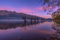 One Calm Pink Sunrise (Arief Rasa) Tags: pink trees newzealand mountain lake reflection sunrise dawn mirror mirrorlake row lakeside willow lakeshore otago queenstown submerged wakatipu sunriseandsunset mountainrange glenorchy dawndusk