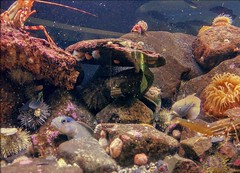 Macaulay Salmon Hatchery Aquarium (JonathanWolfson) Tags: aquarium hatchery