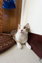 20150405-DSC_2708 (Noelas) Tags: pet cat ed momo nikon 04 g 05 taiwan mo nikkor dslr      yunlin 2015  1424 d810  nikond810 1424mm 142428 nikonnafsnikkor1424mmf28ged