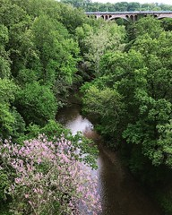 splash of color (ekelly80) Tags: bridge flowers trees water colors washingtondc dc spring purple lookdown below dukeellingtonbridge rockcreekpark rockcreek may2015
