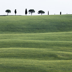 Tuscany squared (Galep Iccar) Tags: tree nature alberi canon square landscape natura 11 tuscany toscana albero paesaggi paesaggio