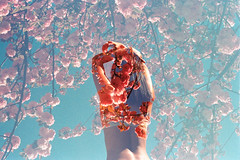 Fruit Punch Sky (Hayden_Williams) Tags: flowers red woman film girl lady analog vintage pose person spring blossom doubleexposure hipster retro multipleexposure bikini fd50mmf18 figure indie bloom analogue canonae1