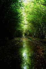 Enchanted Forest (Studio Kuchnia) Tags: enchanted nikon forest wild d700 green nature tree trees valley blueberry blueberries water stream swamp haunting naturallight light sun blueberryfields blossem dreamy