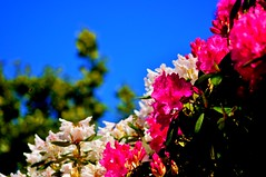 Pretty Garden (NikWatt) Tags: windows macro lens photo edinburgh live handheld 105mm a580 nikwatt edinburghphotographerssigma lenssigmasonysony a580greatscotsgreatcolorscotlandthe braidspolarizedsunnysigma lenssigmasony greatscotsgreatcolorsscotland