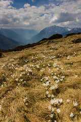 Spring (Andrea Moraschetti Photography) Tags: light sky italy white mountains flower primavera clouds trekking canon landscape spring italian ray view ngc valley summit vallecamonica