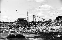 9-30  Harbor at Vinalhaven, Maine 1936 (rich701) Tags: blackandwhite bw 1936 35mm vintage boat maine negative vinalhaven filmroll