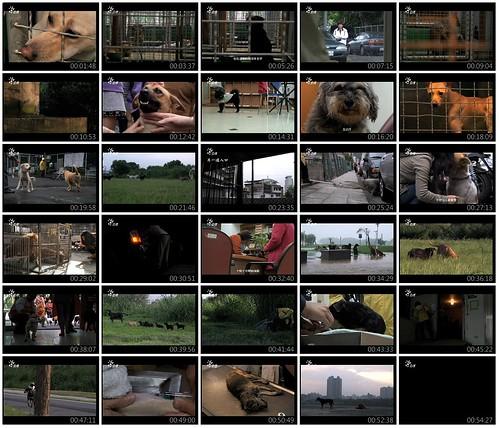 「資訊推」公共電視【紀錄觀點】幸運號碼,線上收看,如果你是一隻狗,你會如何看待這個世界?20111124