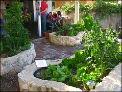 Suburban Vegetable Gardening (suavehouse113) Tags: plants vegetables festival garden spring community suburban australia fair patio agriculture fremantle openhouse freo westernaustralia sustainability philscamera vegetablegarden vegetablegardening 2011 selfsufficiency leafygreens southfremantle raisedgardenbed hulbertstreet hulbertstreetsustainabilityfiesta raisedvegetablegardenbed