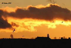 Alnmouth Sunset (claylaner) Tags: sunset gulls northumberland alnmouth musictomyeyeslevel1