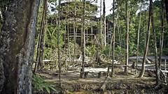 Um anfiteatro, no meio da selva, proximo a cachoeira do Berro d'agua (lubasi) Tags: presidente brazil brasil forest interestingness amazing selva arvores visita pedras array raizes trilhas amazonas trilha placas amazonia figueiredo cachoeiras caminhadas amazonica greatnature biodiversidade