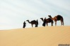 Above the dunes (Abdulaziz Alturki) Tags: trip animal desert camel جمال رحلة بعير صحراء جمل بعارين ناقة نفود