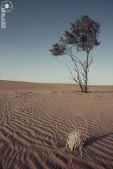 Arid Desert (Faisal Alzeer) Tags: tree photography sand nikon desert sigma arabia 1020 arid  faisal saudis          fnz    d300s  alzeer  abonasser