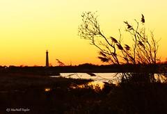 lighthouse sunset - cape may, nj (Jen MacNeill) Tags: ocean sunset summer vacation lighthouse beach yellow newjersey sundown nj shore wetlands capemay grasses marsh eastcoast silohouette macneill gypsymarestudios jennifermacneilltraylor