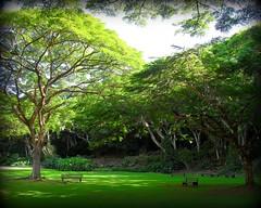 ~~WaimeaBotanicalGarden#18~~ (TravelsThruTheUniverse) Tags: niceshot tropicalplants tropicalflowers exoticgardens zengardens oahuhawaii tropicalgardens tropicalfoliage subtropicalgardens waimeavalleybotanicalgarden tropicallandscapes subtropicallandscapes waimeavalleyoahu waimeaparkhaleiwaoahu