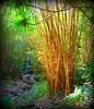 ~~WaimeaBotanicalGarden#1~~ (TravelsThruTheUniverse) Tags: tropicalplants oahuhawaii tropicalgardens tropicalfoliage waimeavalleybotanicalgarden tropicallandscapes waimeavalleyoahu waimeaparkhaleiwaoahu