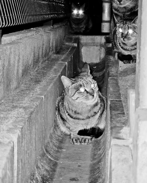Today's Cat@2011-12-14
