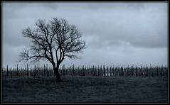 Another grey day (Esther Crauwels) Tags: autumn blackandwhite tree fall netherlands dutch clouds grey december zwartwit sony herfst nederland wolken boom gras picnik zuidlimburg