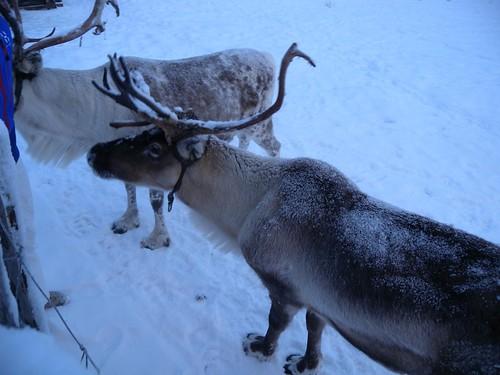 111208_Lappland_286