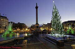 Trafalgar Square London Christmas 2011 (Andrew Thomas 73) Tags: christmas xmas tree london square trafalgar nelsons column 2011