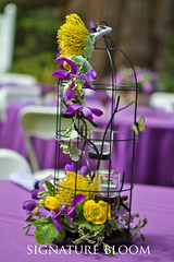 Palo Alto Wedding Floral, Birdcage Flowers (Signature Bloom) Tags: wedding decorations flower birdcage floral yellow for design purple orchids designer events sanjose ranunculus reception designs florist vendor siliconvalley bridal decor peninsula southbay ideas weddingflowers weddingphotos arrangements floraldesign sanjoseca specialevents pincushionprotea centerpieces 94301 weddingideas bridalflowers gardenwedding weddingdecorations floraldesigner flowerdesign springwedding vintagewedding 95121 weddingflorist mokaraorchid purplewedding weddingfloral yellowwedding weddingvendor whimsicalwedding flowersforwedding sanjoseweddingflowers signaturebloom wwwsignaturebloomcom sanjoseweddingflorist bridalflorist weddingfloristsanjose weddingfloristpaloalto paloaltoweddingflowers birdcagefloralarrangements paloaltoweddingfloral weddingflowerspaloalto weddingflowerspaloaltoca paloaltoweddingflorists birdcageflowers weddingbirdcages weddingbirdcageideas vintageweddingbirdcages weddingbirdcagecenterpieces birdcageflowerarrangements