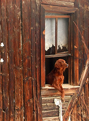 Home Alone (kobbydagan) Tags: wood old pet brown house building cute abandoned broken animal architecture vintage mammal countryside wooden furry cabin friend village watch rustic guard shed structure domestic shelter trusty alert guarding loyal watchdog faithful guarddog watchful chaperon me2youphotographylevel1