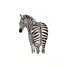 Zebra (k.dmitrijewa) Tags: bw art animal illustration ink paper stripes zebra   pennyjey