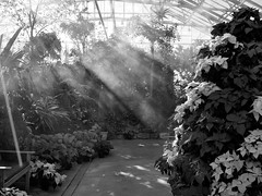 Let There Be Light (btn1131 theromanroad.org) Tags: light blackandwhite bw plants mono misc olympus streaming epl1 mygearandme