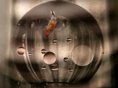 Diving into 2012 (iofdi) Tags: glass female refraction redbelliedwoodpecker happynewyear crystalball oilinwater 94of100 iofdi 100possibilities threephotoslayerd