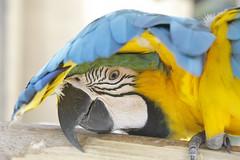 _MG_1868 (James_Roberts) Tags: bali holiday october 2011 tamanburungbalibirdpark
