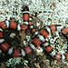 2008 AHS Spring Field Trip - Red Milk Snake