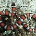 2008 AHS Spring Field Trip - Red Milk Snake
