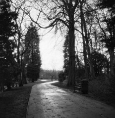 Winter solitude (Born in York) Tags: park trees winter light path halo nelson rodinal luckyshd100 standdeveloped microcordmk2tlr