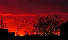 Scarlet sundown (nikkorglass) Tags: winter light sunset red macro home colors silhouette scarlet garden fire vinter gnome nikon sundown sweden january led micro dxo sverige nikkor 70200 f28 vr tomte januari 2012 hemma trädgård solnedgång eld röd färger d300 ljus silhuett 105mmvr nikkorglass veke