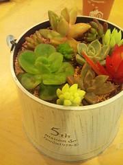 多肉植物*の写真