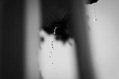 Chuvinha de Janeiro (Erica Bueno) Tags: rain branco janeiro chuva preto erica bueno assis