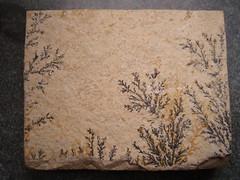 Manganese Dendrites (GorissenM) Tags: museum limestone manganese dendrites