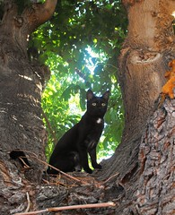 Calli's Favorite Tree (Callisto_Star) Tags: pet cats animal cat kitty kittens kitties
