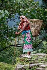 Delivery Van (Michał Olszewski) Tags: nepal people woman other asia basket land himalayas furnishings tamu ethnicity gurung acap gandaki kaski ethnicgroup annapurnaconservationarea annapurnaconservationareaproject