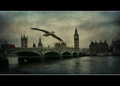 El vuelo sobre el Rio Tamesis / The fly over the river Thames (davidpuig | photography) Tags: greatbritain inglaterra trip travel viaje bridge england bird london texture textura westminster rio thames canon river puente fly arquitectura unitedkingdom bigben ave londres arquitecture vuelo reinounido tamesis 2011 granbretaa 450d photoshopcreativo magicunicornverybest magicunicornmasterpiece rememberthatmomentlevel4 rememberthatmomentlevel1 rememberthatmomentlevel2 rememberthatmomentlevel3 kurtpeiserexcellence