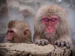 Monkey onsen (c_c_clason) Tags: leica japan monkey digilux2 onsen nagano shigakogen jigokudani snowmonkey japanesemacaques
