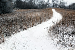 pittsfield preserve (beckstei) Tags: park trees winter snow field forest landscape weeds path michigan farm annarbor utata wildflowers preserve pittsfield