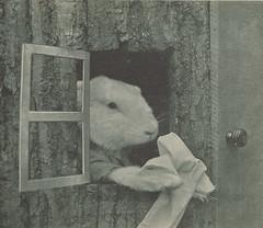 Four Little Bunnies 09 (ja450n) Tags: bunnies easter harry rabbits whittier 1935 frees harrywhittierfrees