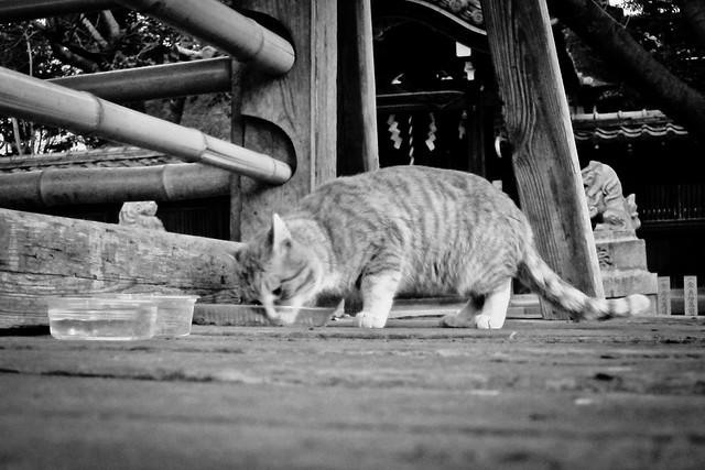 Today's Cat@2012-01-30