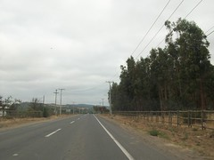 RUTA 90 ALCONES (Rutas de Chile) Tags: chile road ruta carretera route estrada rodovia