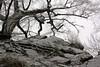 "E'  iniziato a nevicare ("" paolo ammannati "") Tags: sky italy panorama snow ice alberi forest italia shot top natura ombre cielo tuscany neve toscana terra inverno viaggi radici verna bosco casentino ghiaccio foresta faggio galaverna paoloammannati effettinaturali fotoconneve panoramaconneve"