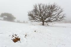 (Antonio Carrillo (Ancalop)) Tags: espaa white snow tree blanco fog canon landscape arbol la spain europa europe mark nieve foggy paisaje ii l 5d lopez antonio niebla 1740mm carrillo albacete castilla mancha ancalop