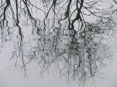 reflections 2 (kenderfrau) Tags: water rain reflections circles surfaces