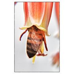 Gathering pollen from an aloe affinis blossom (reddingaz2011) Tags: flowers arizona orange plant flower macro insect botanical aloe bee honeybee desertbotanicalgarden flowerporn dbg aloeaffinis