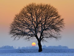 icy winter (pierre hanquin) Tags: blue winter light sunset sky sun snow color colour tree nature colors field landscape geotagged soleil nikon europa europe colours belgium belgique couleurs hiver champs belgië bleu ciel fields neige blau paysage landschaft arbre couleur liège wallonie naturepoetry d7000 bestcapturesaoi magicunicornverybest magicunicornmasterpiece fleursetpaysages mygearandme mygearandmepremium mygearandmebronze mygearandmesilver mygearandmegold mygearandmeplatinum mygearandmediamond hanquin